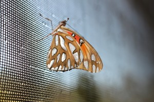 Butterfly on a screen